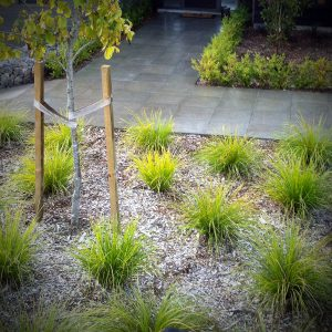 Total Landscape Solutions - Maintenance